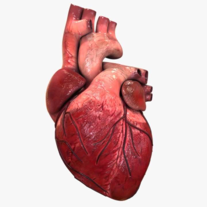 El corazón humano | Aumentaty Community