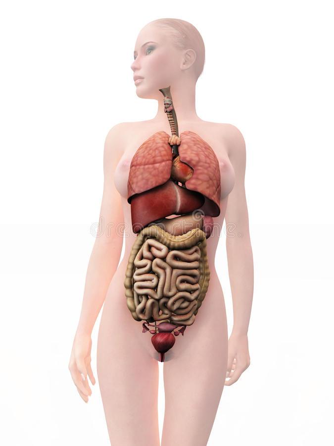 Organos del cuerpo humano | Aumentaty Community