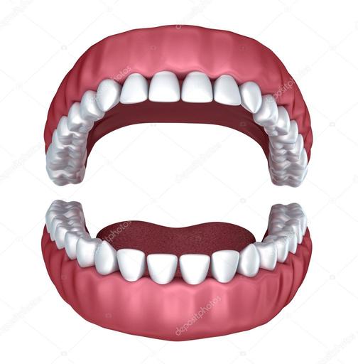 dientes humanos | Aumentaty Community