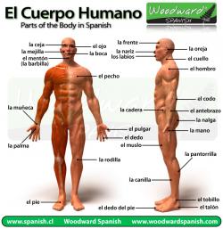 EL CUERPO HUAMANO 2