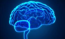 Cerebro partes