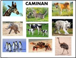 MOVILIZACION DE LOS ANIMALES