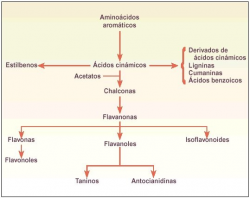 PyMetabolitos secundarios