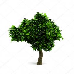 Copa de los árboles