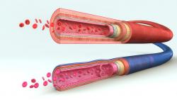Flujo sanguineo 2