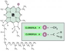 Clorofila 3d