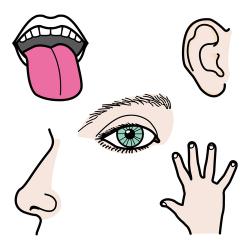 A través de los cinco sentidos