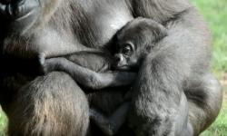 Nacimiento Animal