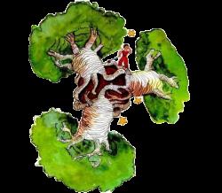 Baobabs principtio