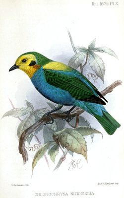 Aves de Colombia 1