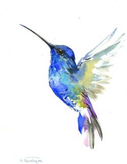 Aves de colombia 2