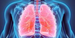 BT 06 – sistema respiratorio