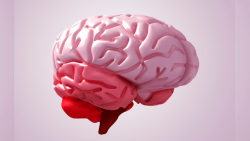 Cerebro y aprendizaje