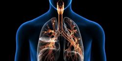terminologia de sistema respiratorio