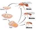 Hormigas volumen 2