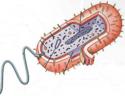 Biologia CPEM33