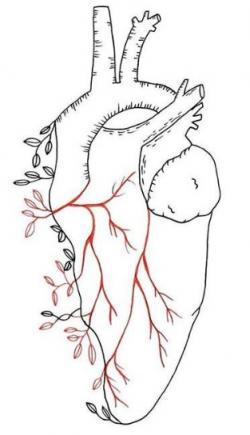 Circulatory System – HEART