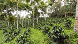 Agroforestal