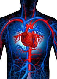 sistemas circulatorio